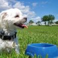 Quando un cane mangia poco: le cause dell'inappetenza